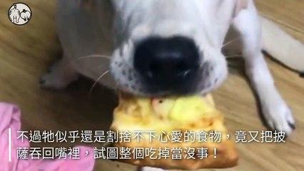 petmao_nownews-copy2-20200504-20:01