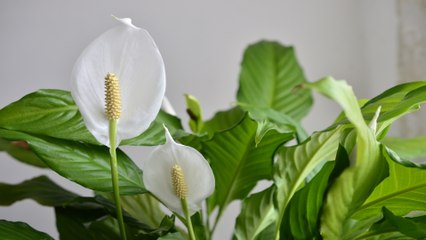 9 Houseplants that Remove Toxins from Your Indoor Air