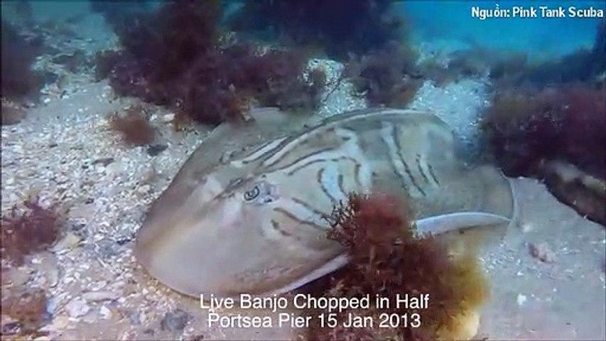 Phát hiện hàng loạt sinh vật bị chẻ đôi đầu dưới biển, thợ lặn tìm hiểu nguyên nhân và phát hiện sự thật kinh hoàng | Godialy.com