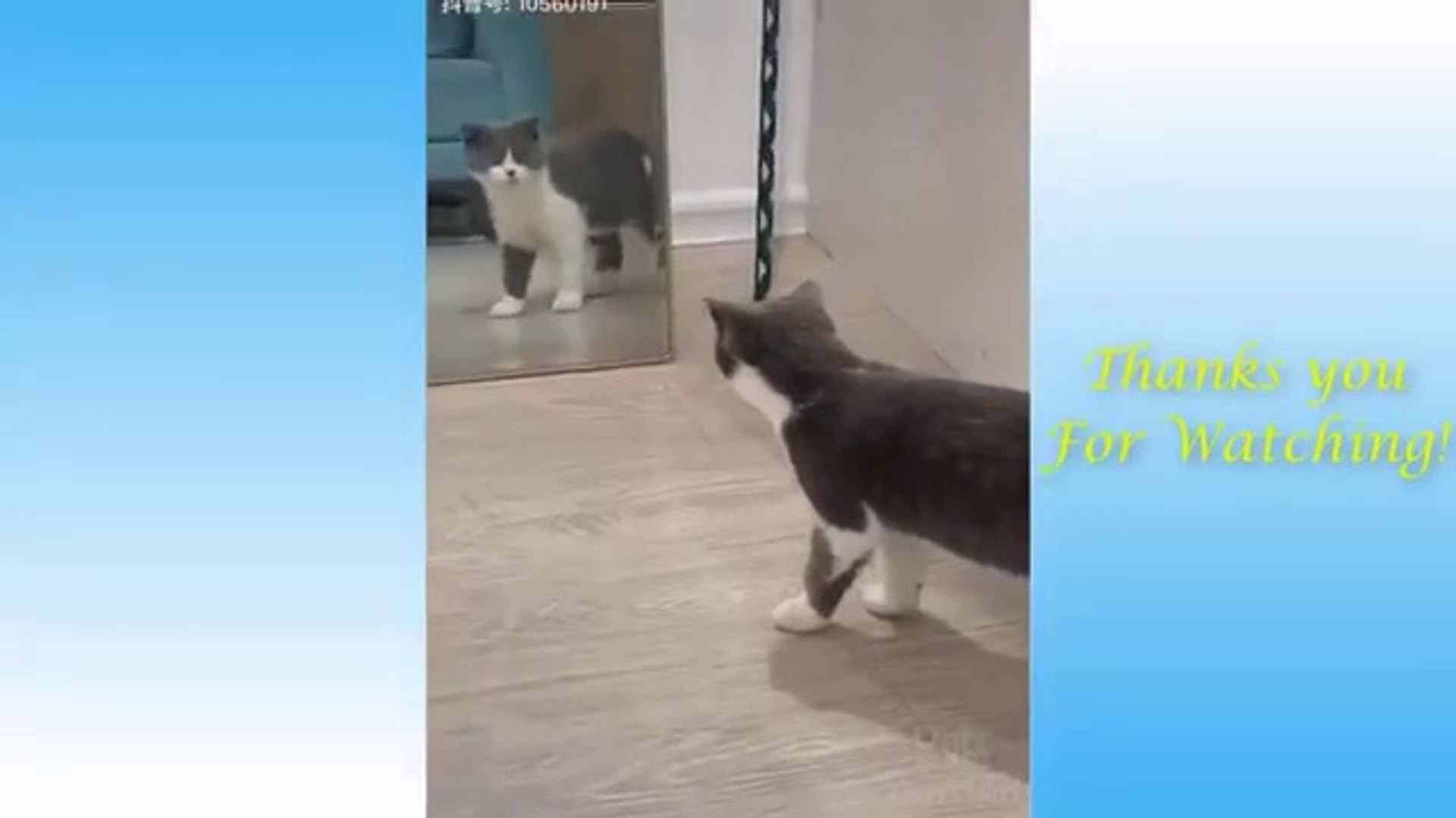 Cute Pets And Funny Animals Compilation #6 - Pets Garden