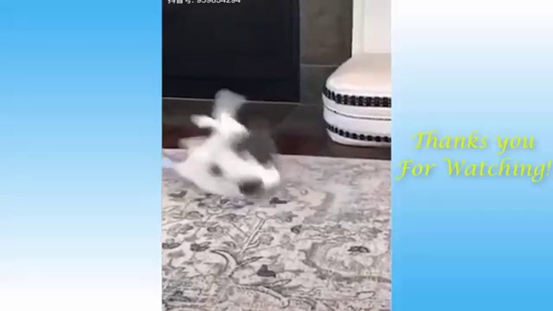 Cute Pets And Funny Animals Compilation #5 - Pets Garden