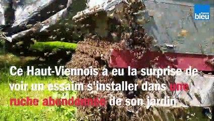 Un essaim s'installe dans le jardin d'un Haut-Viennois