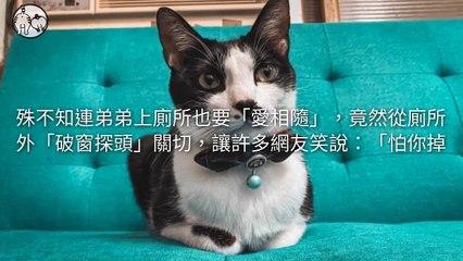 petmao_nownews-copy4-20200508-20:01