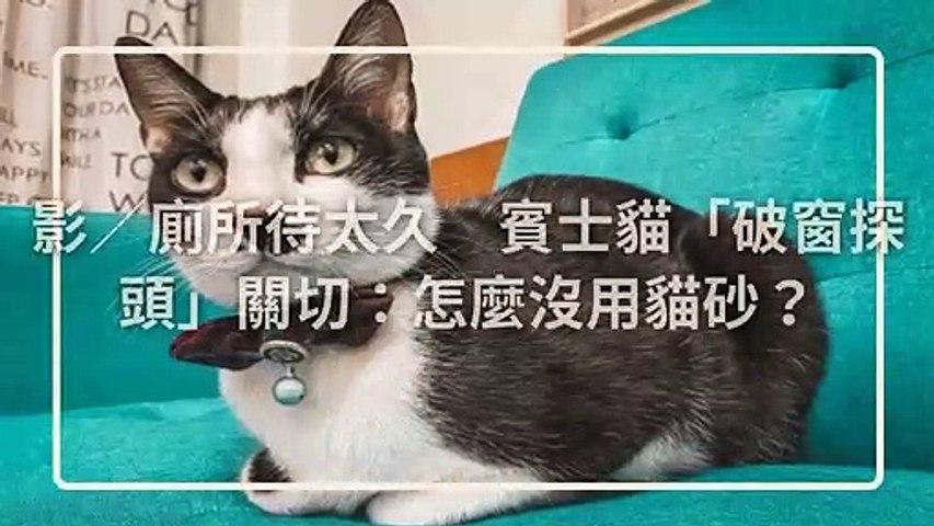 petmao_curation_mobile-copy4-20200508-20:02