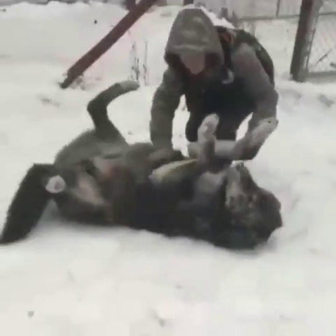 KARA KURT ile SAKALASAN KIZIN CESARETi - GAME PLAY WITH BLACK WOLF