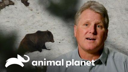 Él salió de cacería y se convirtió en la presa de oso enfurecido | Solo y en peligro | Animal Planet