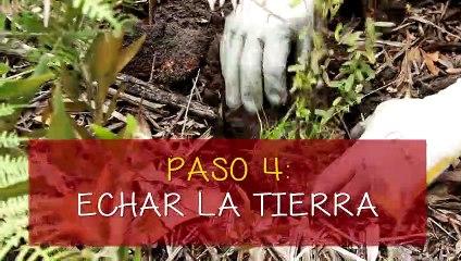 #RicoyCharladito Siembra de Arboles