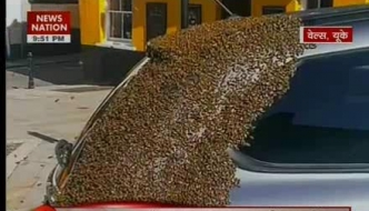 Honey bees swarmed a car in UK