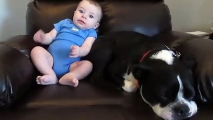 Dog's reaction to baby pooping