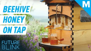 This beekeeping hive harvests the honey for you — Future Blink