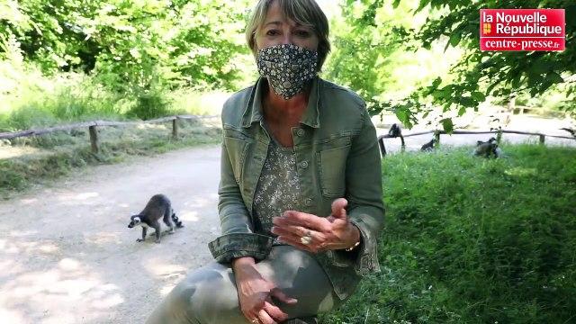 VIDEO. Romagne : le parc de la Vallée des singes rouvre le 29 mai