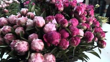 Pivoine : la plus belle des fleurs de mai