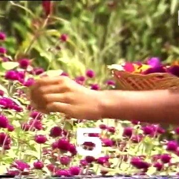 Rathu Rosa - Episode 05 | Sinhala Teledrama
