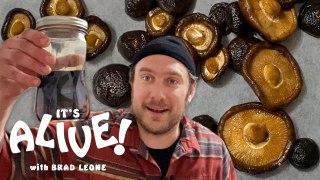 Brad Makes Fermented Mushrooms