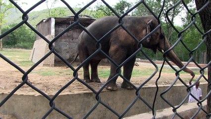 Elefant in Pakistan kommt frei – Cher jubelt