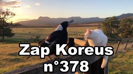Zap Koreus n°378