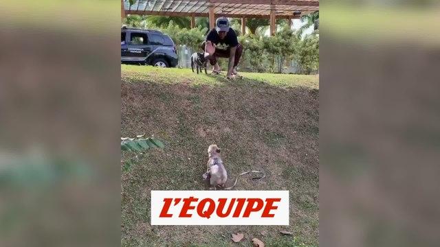 Alves, premier supporter... de ses chiens - Foot - WTF