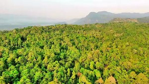 Drone view- beautiful green landscape