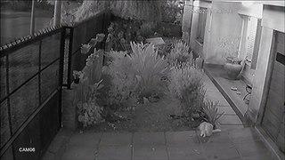 Ce chat détestera les portails automatiques pour le restant de ses jours
