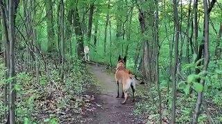 Balade en forêt : il rencontre un loup !