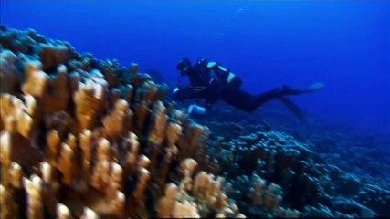 France 5 - Danger sur les requins de l'île de Pâques bY ZapMan69