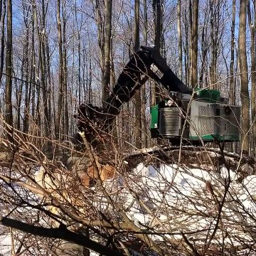 Forestry Excavator Takes Down Big Tree | Timberpro Rolly Felling Tree | Forestry Machine