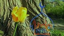 Islamic VitaminC - Season one - 6 - The Testimony - فيتامينات اسلامية - الموسم الأول - 6 - الشهادة -