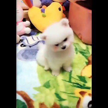 Cute Puppies Doing Funny Things 2020  #8