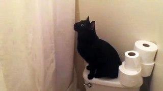 Intrigué, ce chat miaule quand elle chante sous la douche !