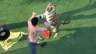 Il joue avec son tigre comme si c'était un gros chat