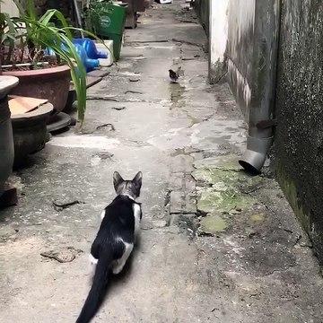 CAT Amazing Hunting Unbleiveable