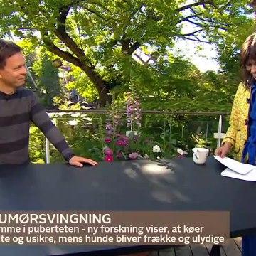 COVID-19; Ulf Pilgaard ~ Et udskudt farvel & Cirkusrevyen er aflyst i 2020 | Go morgen Danmark | TV2 Danmark
