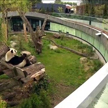 KLIP med dyrene og genåbning i Københavns Zoo | Maj 2020 | Nyhederne | TV2 Danmark