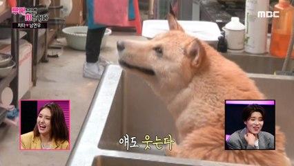 [HOT] bathe a puppy, 부러우면 지는거다 20200601