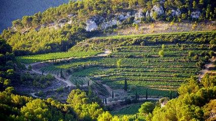 Château Pibarnon 1983, un vin suave aux arômes de garrigue et de cuir noble