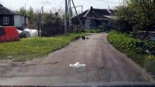 Ce corbeau se prend pour un prof de karaté et motive son élève chat