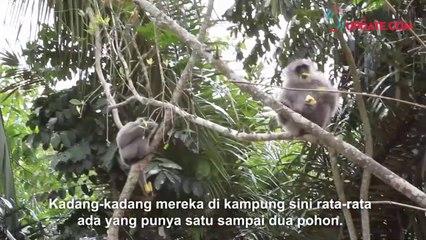 Tini Kasmawati, Tuna Netra Penjaga Owa Jawa di Hutan Lengkong