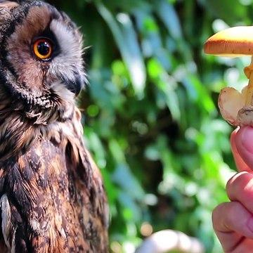 BEST BREAKFAST! - feat. Mr.Ramsay the Owl
