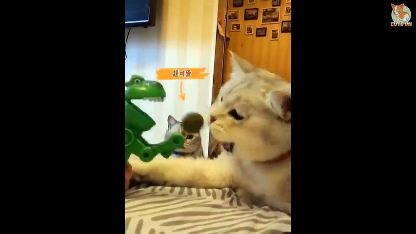 TRY NOT TO LAUGH  - Funny and Cute Animals Compilation 2020 #81- Cute Animal