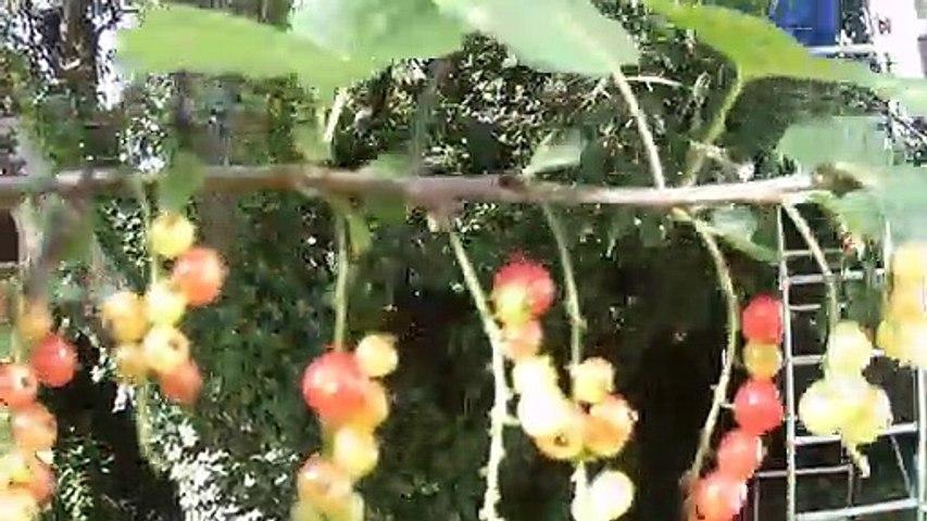 Les Fruits du jardin se déconfinent !