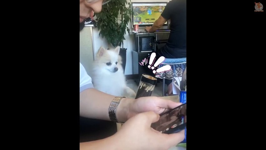 TRY NOT TO LAUGH  - Funny and Cute Animals Compilation 2020 #57 - Cute Animal