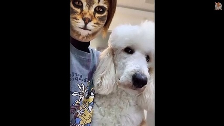 Funny Dogs & Cats Scared Of Cat Mask Filter - Dog & Cat Reaction To Mask Filter #3 - Cute animal