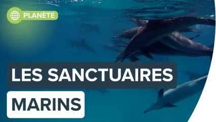 Des sanctuaires marins pour animaux en danger |Futura