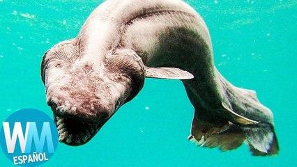 Top 10 Criaturas más MISTERIOSAS en las Profundidades del OCÉANO