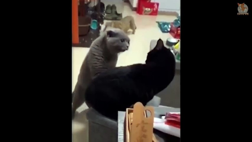 OMG! - Cats  And Dogs Can Speak English! #3 - Cute Animal