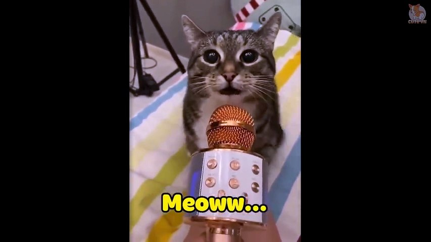 TRY NOT TO LAUGH  - Cats  And Dogs Can Speak English!  #1 - Cute Animal