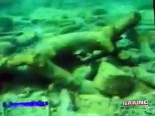 """Puglia: il mistero della """"foresta pietrificata"""", un tesoro sommerso da scoprire"""