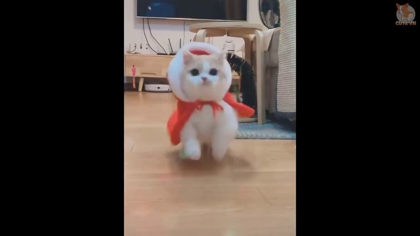 Cute is Not Enough - Cute Kittens In The World #4- Cute Animals
