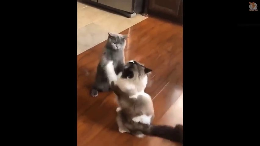 Cute is Not Enough - Funny and Cute Animals Compilation 2020  #53