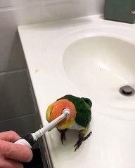 Comment faire plaisir à sa perruche